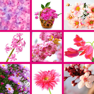 9 fotografas gratis de flores color rosa, fucsia y lila.