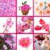 9 fotografías gratis de flores color rosa, fucsia y lila.