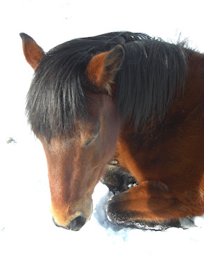 Sleeping horse in the snow