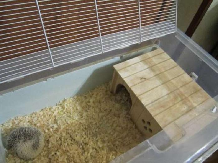 Условия для ежей в домашних условиях