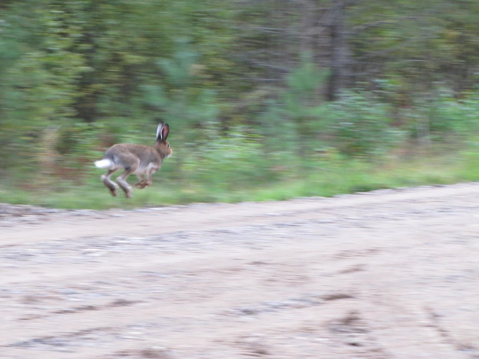 juokse villi lapsi Kouvola