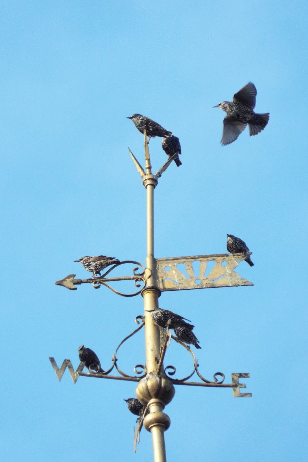 Caterpillar poetry devils and miracles crows ravens jackdaws devils and miracles crows ravens jackdaws and rooks in poetry buycottarizona