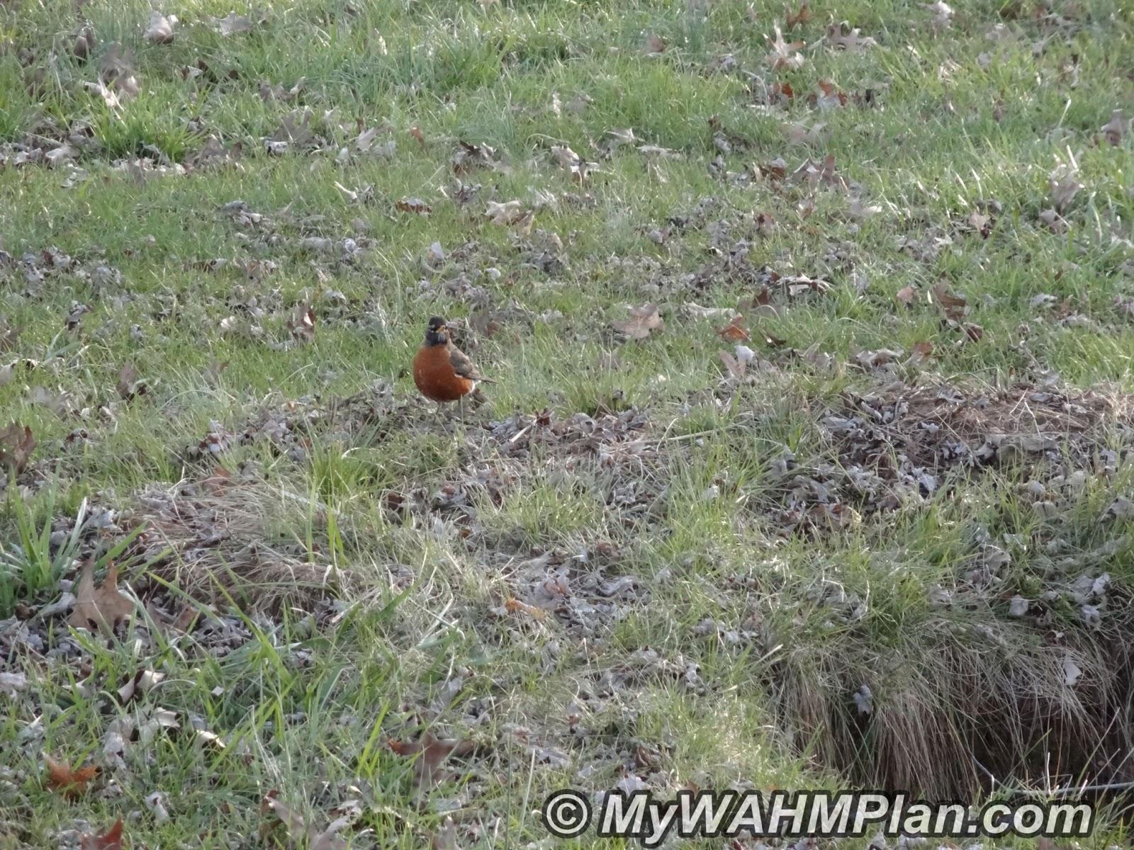 spring, signs, birds, Robin #garden