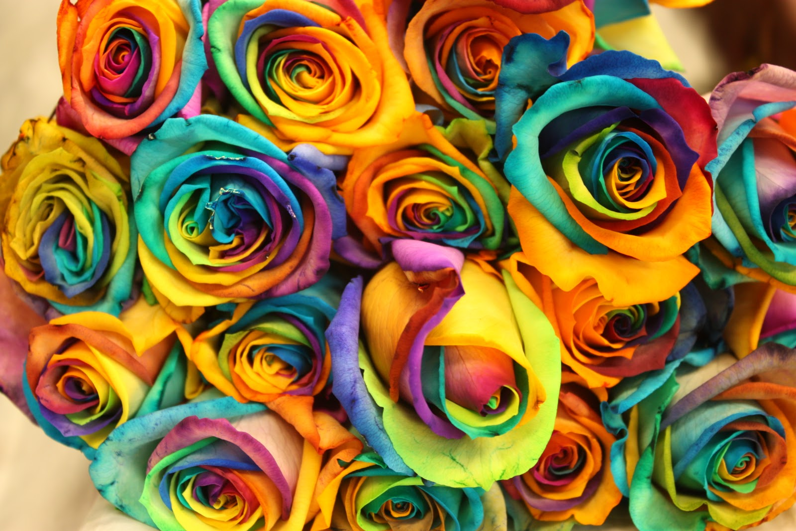 Colorful roses wallpapers wallpaper albums for Pics of colourful roses