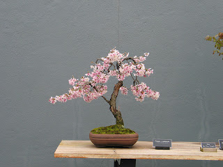 Curso de creaci n y cultivo de bons i durazneros cerezos etc - Cultivo de bonsai ...