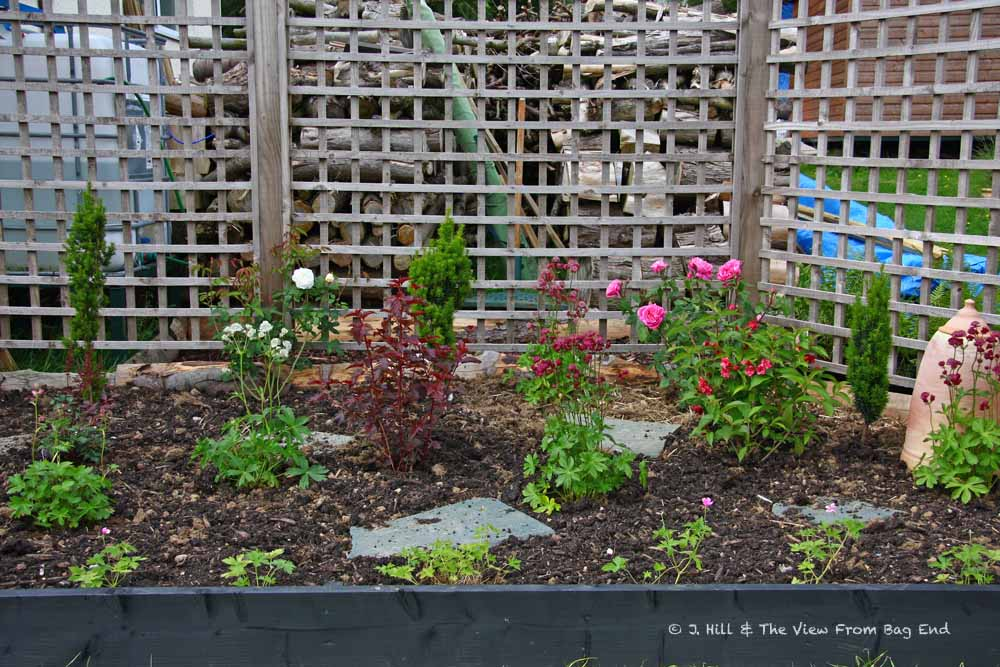 how to know if geranium is dead