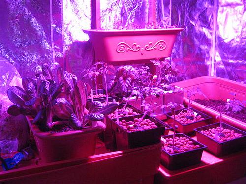 Iluminacion led elegir lampara led para cultivos for Leds para cultivo interior