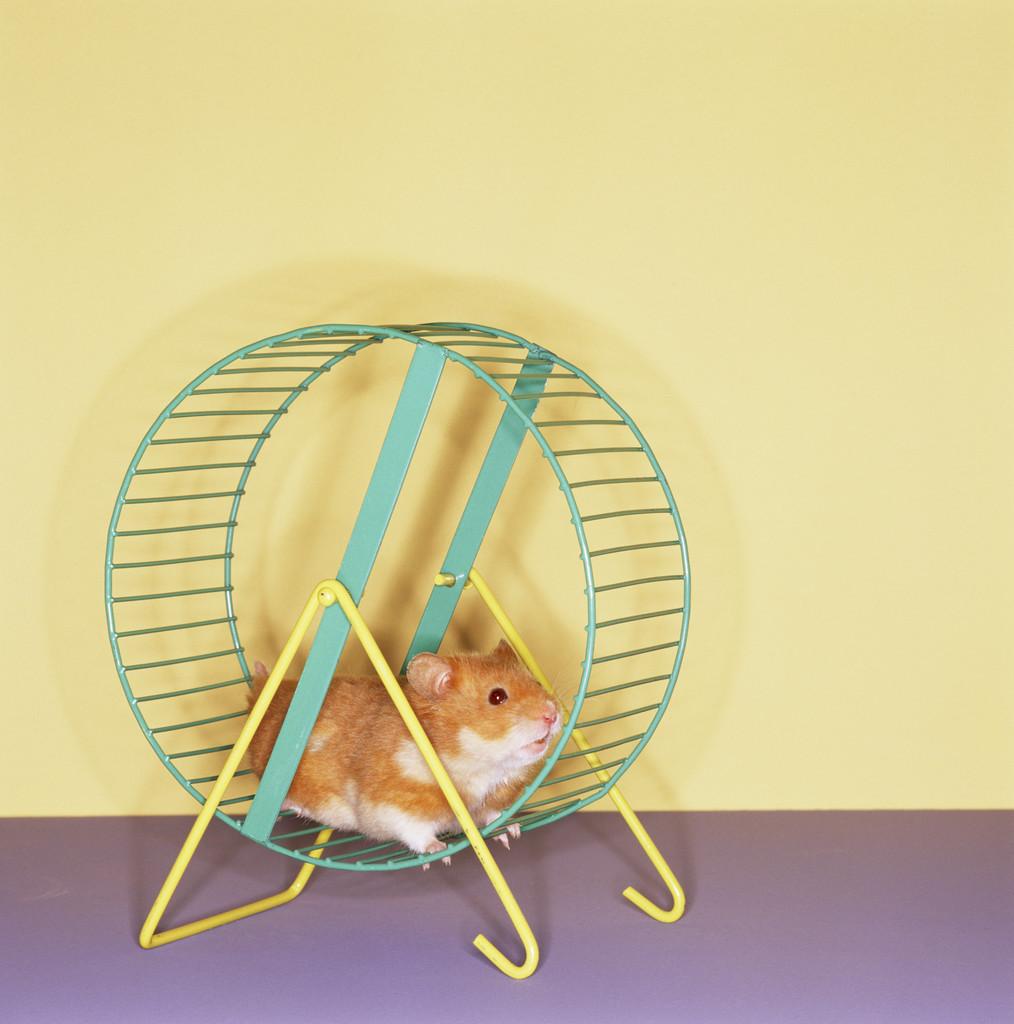 Hamster Wheel Costume Off Your Hamster Wheel