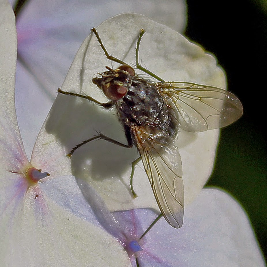 Buy wall art of Fly on a Petal