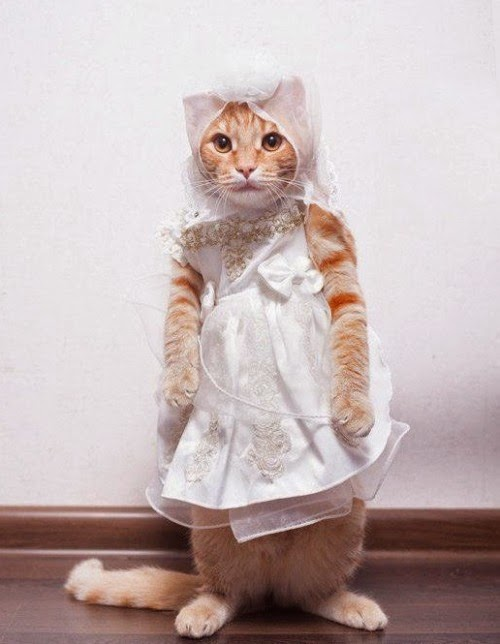 Funny Cats In Dresses