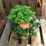 Plantas en macetas