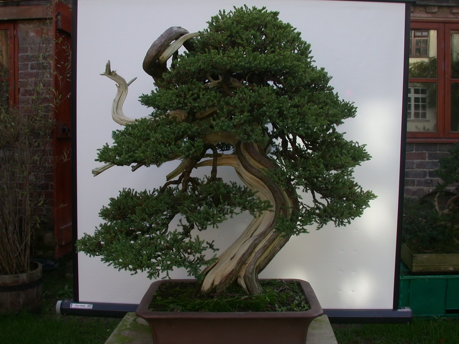 Steve Tolley39s Bonsai And Suiseki Blog