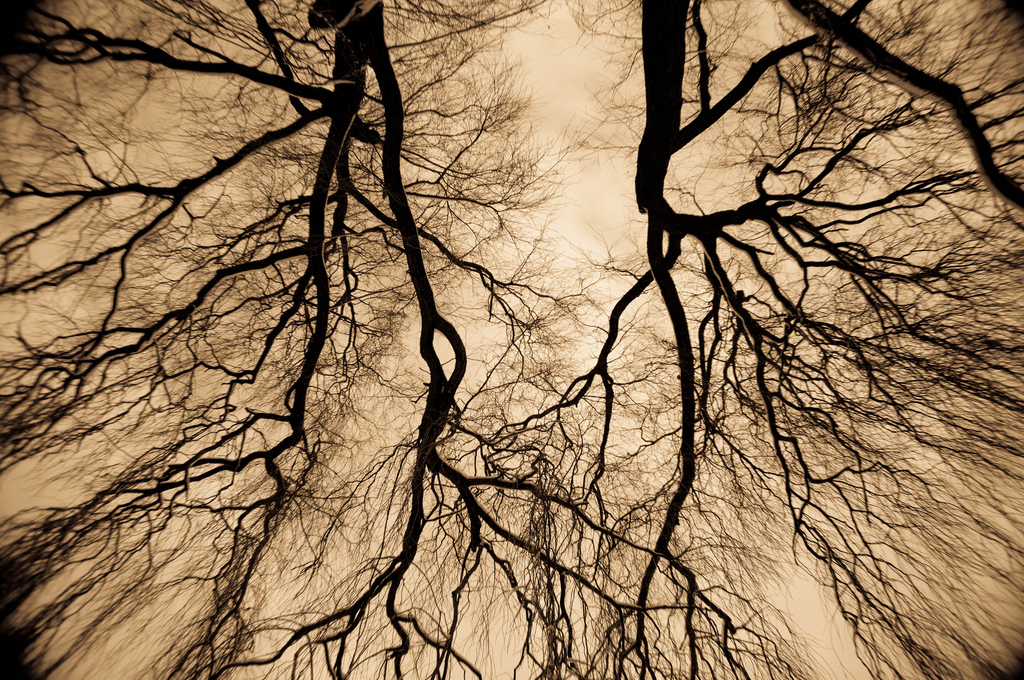 Blood vessels, Circulation