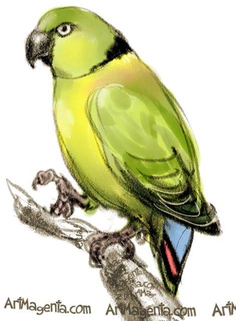 Black-collared Lovebird sketch painting. Bird art drawing by illustrator Artmagenta.