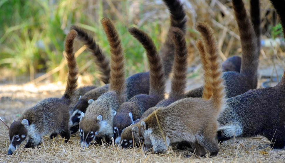 Os animais mais trapaceiros do planeta
