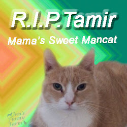 Sweet Tamir we miss you