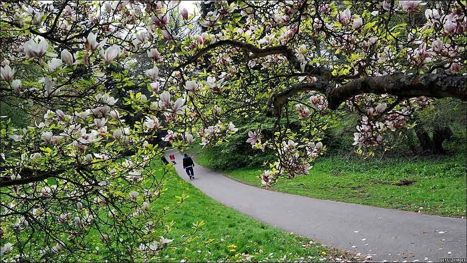 Contraquerencia y a contramano el magnolio de la catedral for Arboles con flores para jardin