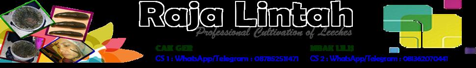 RajaLintah.com | 087852511471