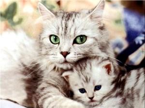 Foto de una gato hembra (gata) con su cria