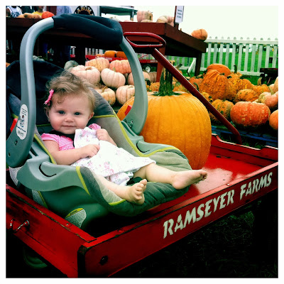 Stella at Ramseyer Farms