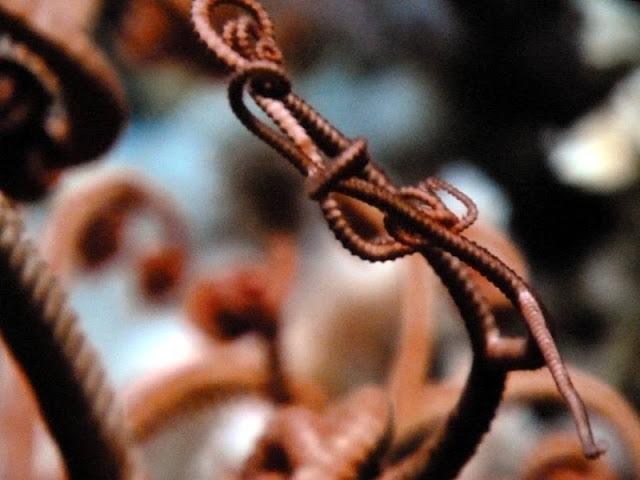 Gorgonenhaupt in der Tiefsee-Ausstellung im Lokschuppen Rosenheim