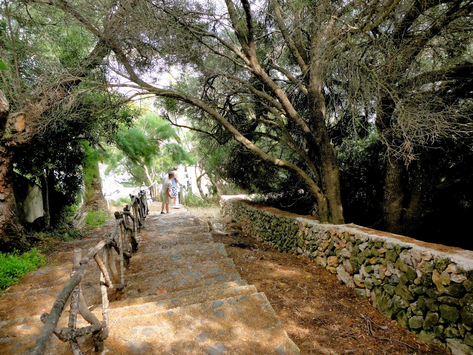 Travel Inspiration | Menorca, Spain | quiet rural forest path surrounded by trees