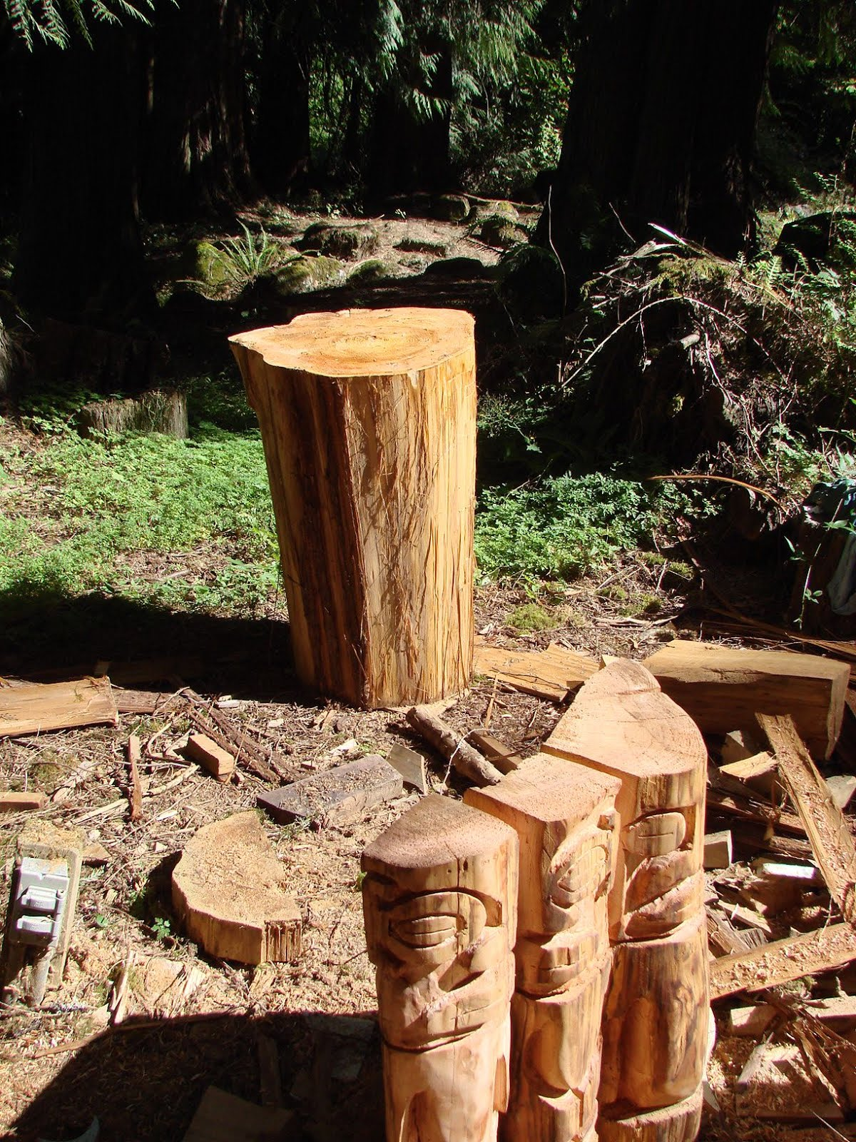 Also stripped the top portion of the same log.