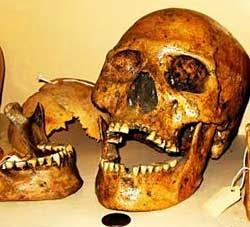 La cueva de los Gigantes en Nevada USA que la ciencia quiere ocultar Cueva+Lovelock+calaveras+gigantes+y+partes+de+cr%C3%A1neos+hallados+en+la+cueva+se+encuentran+en+el+Museo+Winnemucca