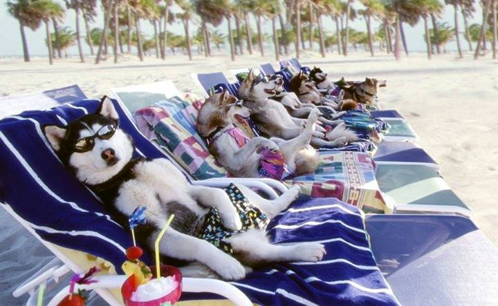 cute dogs beach