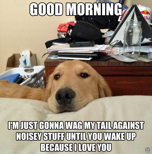 Good Morning I M Up Meme : Good morning i m just gonna wag my tail against noisey