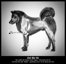 cho,cho phu quoc,chuong cho,chuong cho inox,Chuồng chó,chuồng chó inox,chuồng chó sắt,Chó,chó phú quốc,lam chuong cho cho,làm chuồng cho chó,chó bắc hà,