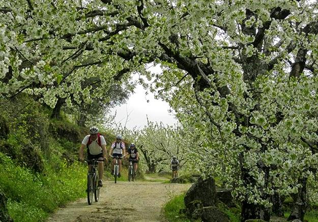 Ruta BTT del Cerezo en Flor