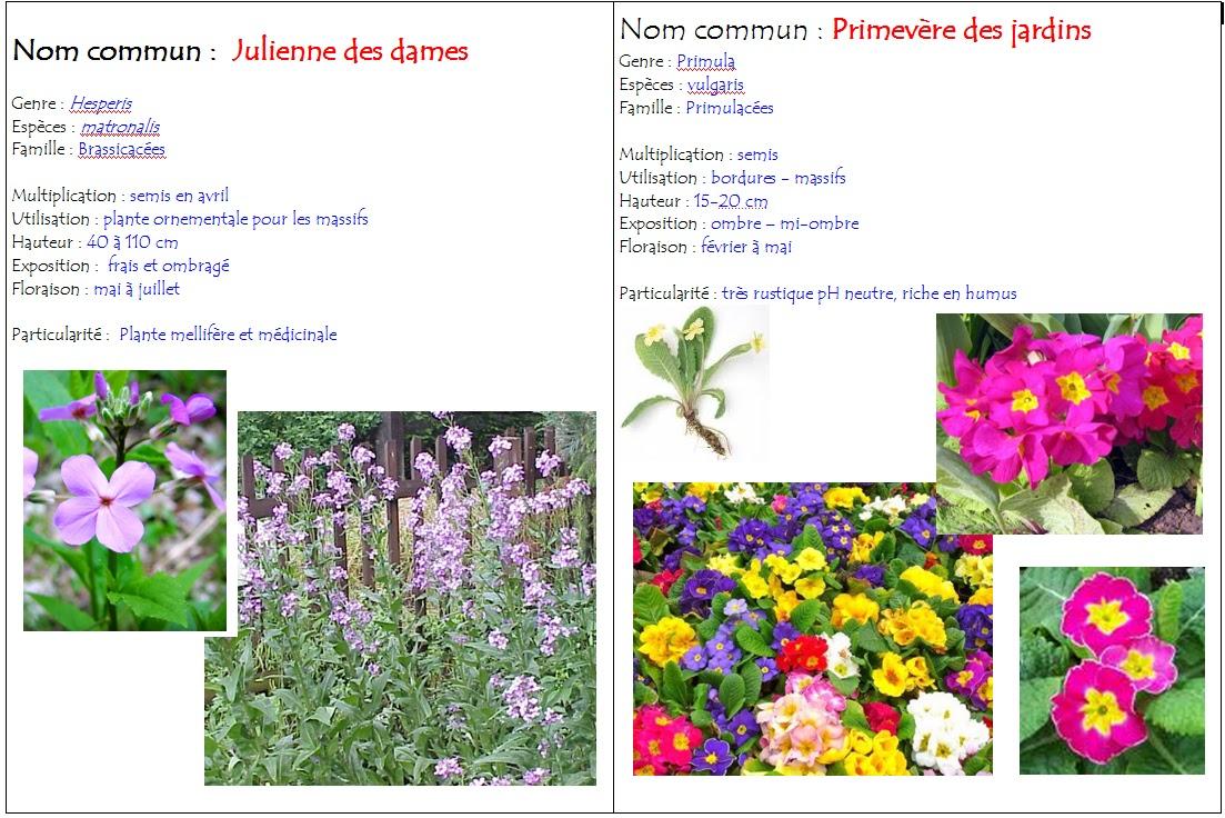 Polyculturevert les plantes bisannuelles for Toutes les plantes