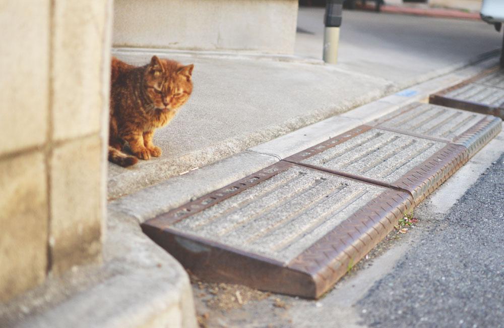偶然出会った猫の写真