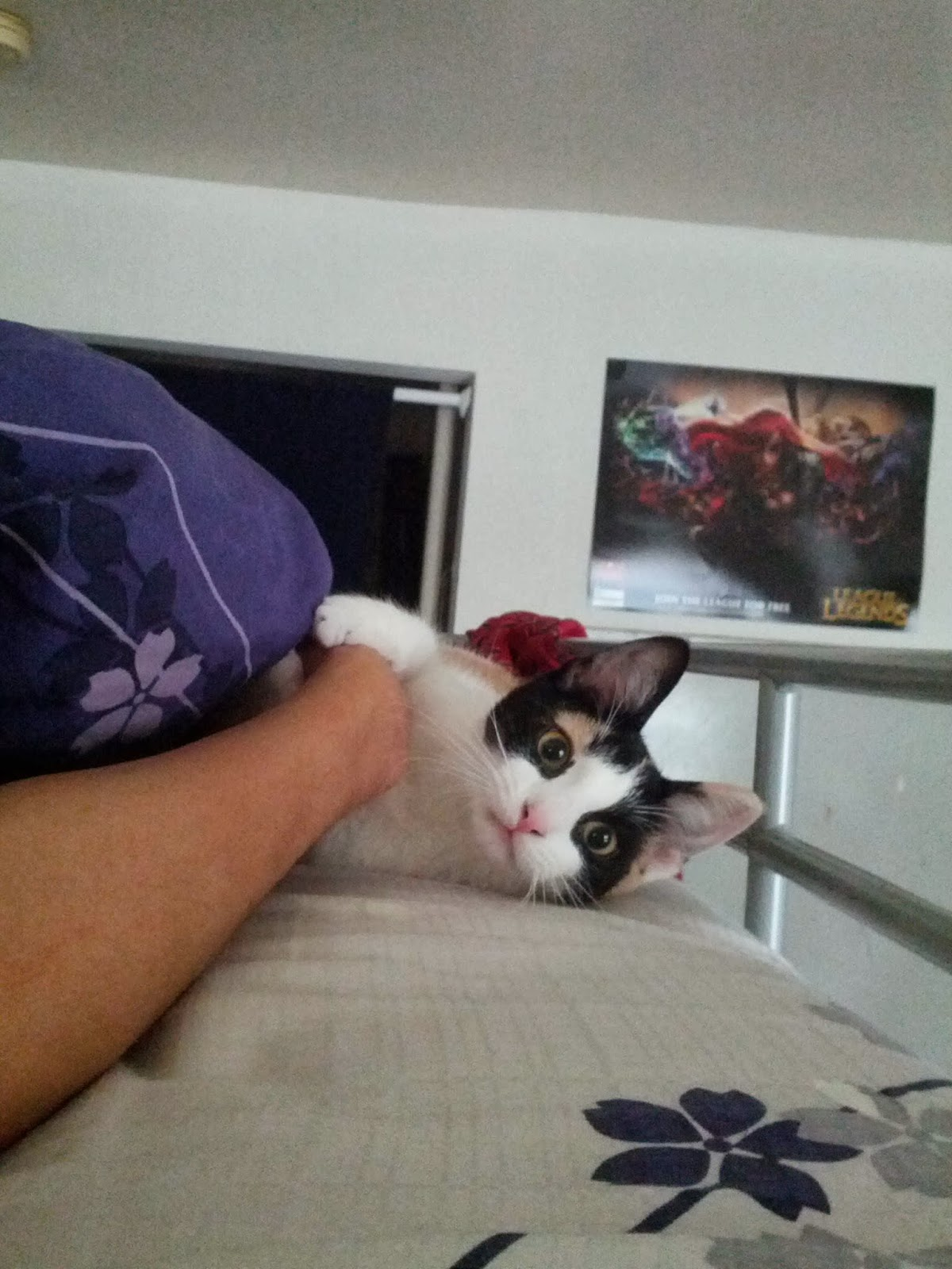 Funny cats - part 82 (40 pics + 10 gifs), cat photo, cat holds owner hand