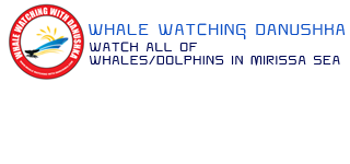 whale watching in Mirissa | Whale Watching Danushka