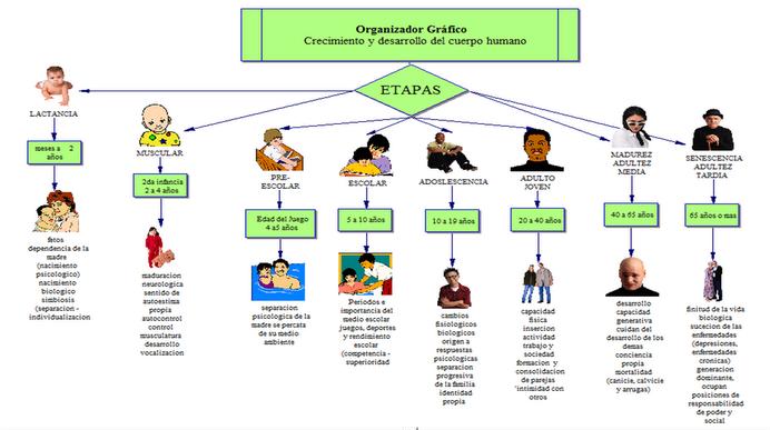 Dibujos para colorear sobre etapas del desarrollo humano - Imagui