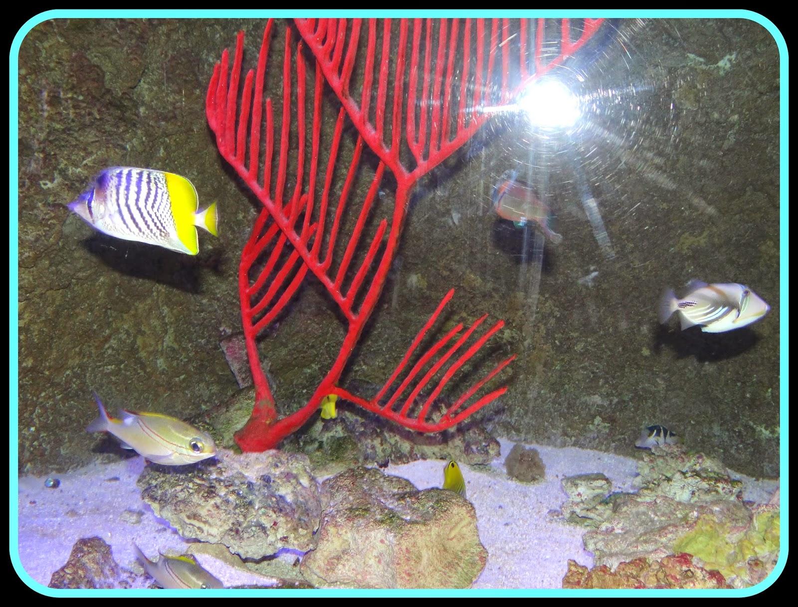 Pattie\'s Place: The Living Planet Aquarium Trip in Sandy, Utah
