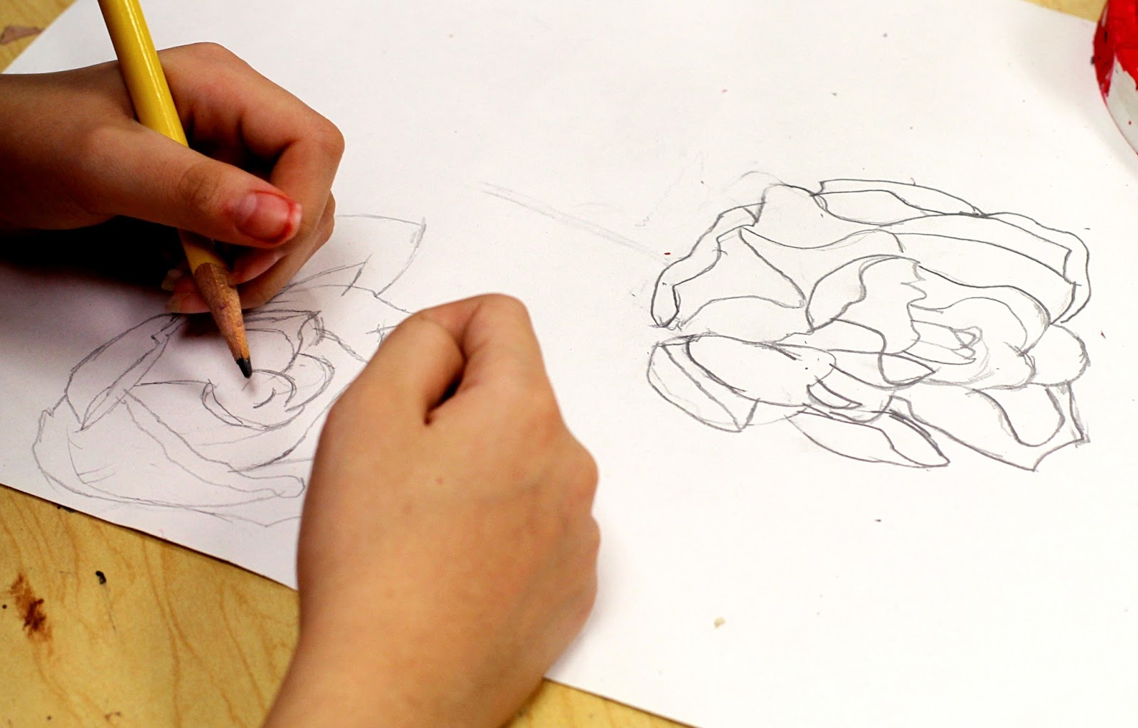 Contour Line Drawing Rose : Smart class still life roses