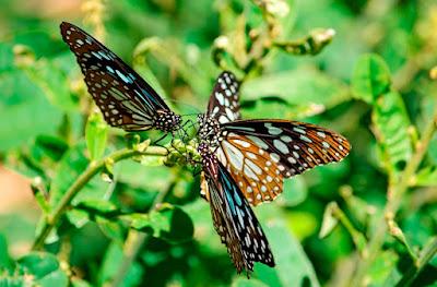 bvkmohan.blogspot.in,bvkmohan,nye 2016,wanderlust,bike life,touring,karanji kere, butterfly park