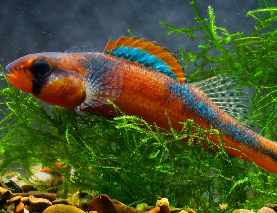 November 2013 fishes world for Freshwater exotic fish