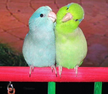 All about birds types of lovely pet birds as your home for Birdhouse types