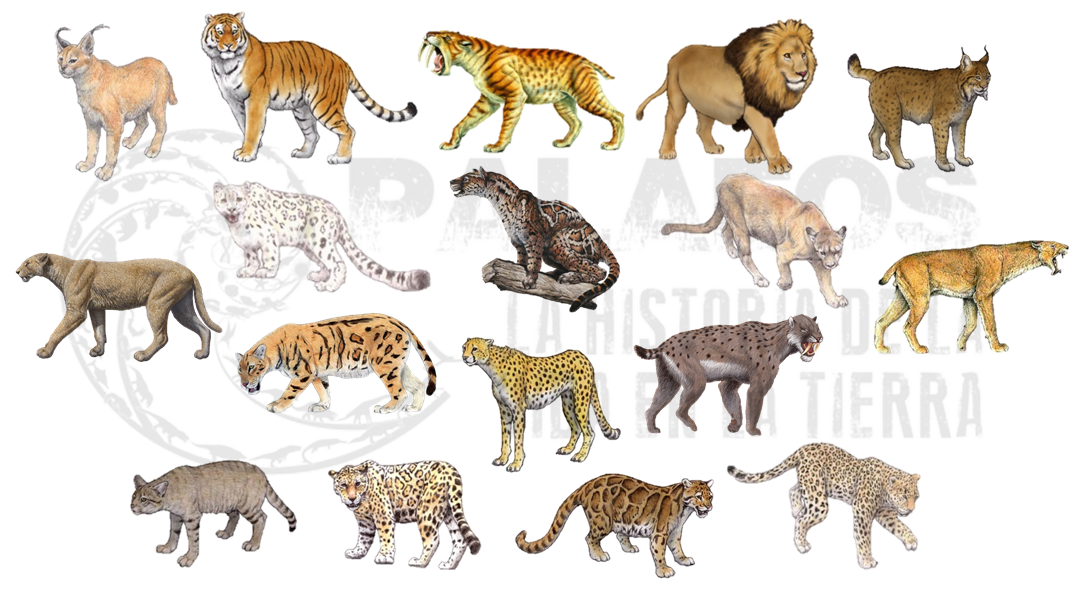 Palaeos, la historia de la Vida en la Tierra: Gatito gatito