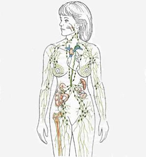 Reflexologia podal sistema linfatico