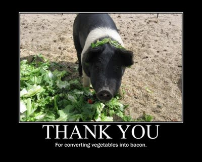 Pigs turn vegetables into bacon