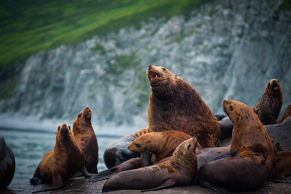 National Geographic: лучшие фотографии августа
