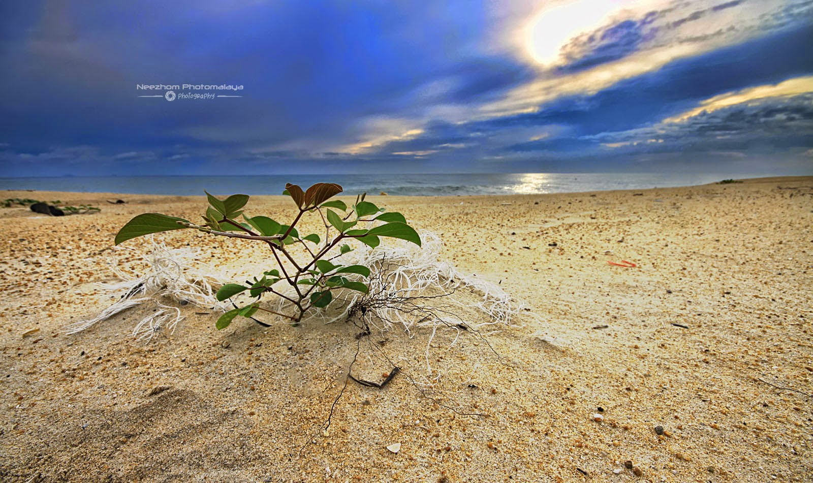 Pokok renek di Pantai Batu Rakit