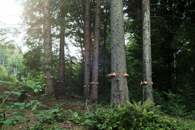 amo gli alberi
