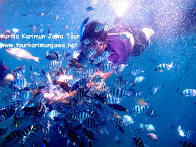 snorkeling memberi makan ikan kecil