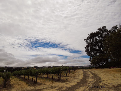 Cloud Formation over  Doce Robles Vineyard, Paso Robles, © B. Radisavljevic